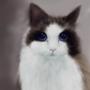Cat by xaolan
