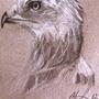 Eagle in Profile