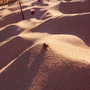 Dune Bug by Kubopix