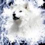 Wolf in Vortex
