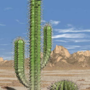 Cactus with a Top Hat by Gnomeface
