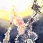 Warm Frost by Waex