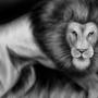Realistic Lion - Omar Madaein by OmarMadaeinArt