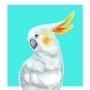 Birdy! by juicebeverage