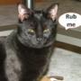 rub me by qww955