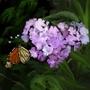 Butterfly by ThePutamen