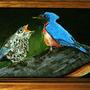 Birds by Crev