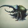 rhinoceros beetle by madiso