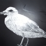 scratchboard gull by White-Blank
