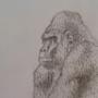 Gorilla by grillhou5e