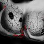 Decrepit Beauty by ShadyDingo