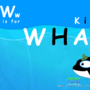 Ww is for WHALE - Killer WHALE by wad247