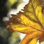Leaf Study by ZestyNoodles
