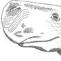 dimensional whale by freaknarf
