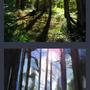 Thumbnail Practise - Forest by BugsAndBooks