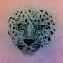 Leopard by xAzimuthx