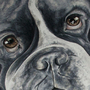 English Bulldog by MojoRising