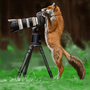 Fox and Camera by billtheartist