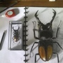 Stag beetle-Hexarthrius parryi by Kiabugboy