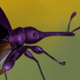 some insect by Sabathorn