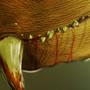 The Unknown Predator by ZaracaM