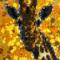 Giraffe Bead Art