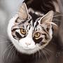 Cat Cast by Clootie