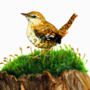 Wren by BirdGVee
