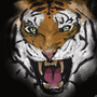 Tiger Fade by JanK33