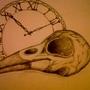 Crow Skull by PaulaHarris