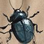 Bugs by KattyC