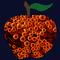 The Apple XXVII: Effervescent Apple