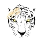 White Tiger by Imrie