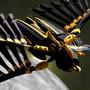 Argeste Phoenix by Cordyceps