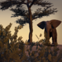 Baby Elephant by ridzuan-Shah