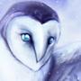 Snowy Owl by LukeF