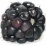 Fruits by niferdil