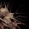 Bacterium: Demagnoecyte