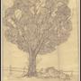Study of a tree by WVSSAZ