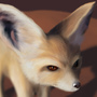 Fennec closeup by B-Rehnqvist