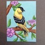 Goldfinch ACEO by HandDrawnViolist