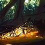 The cove moodpainting by Kamikaye