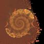 Conch by Kaizerwolf