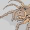Crail Spider