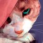 Cat Boy by zephyo