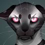 Grumpy Safiru