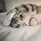 Random Cat Pencil Drawing