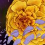 Space Flower?? idk by EmpteeSpace
