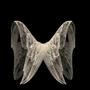 Lost Wings by StarTrekOmega