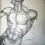 Hogarth Anatomy Drawing by Naulen